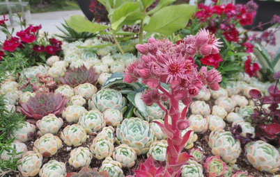 Alpine Plants: High Performers at Low Altitudes Too