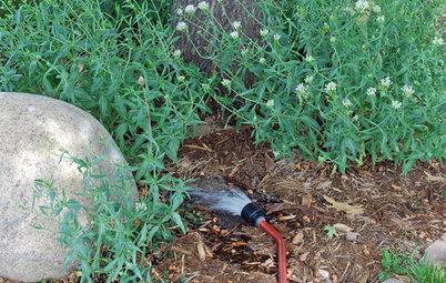 Rocky Mountain Gardener's August Checklist