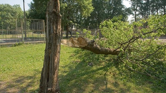 San Antonio Tree Experts
