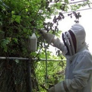Budget Bee Removal's photo