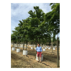 Barcham Trees Nursery