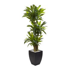 5.5 ft. Corn Stalk Dracaena with Black Wash Planter in Green