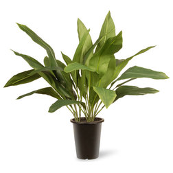 Traditional Artificial Plants And Trees by National Tree Company
