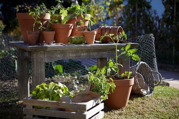 Contemporain  Outdoor Living, Gardening and Irrigation