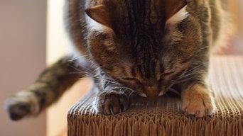 Cat toys_own photos