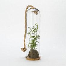 Indoor Plants and Planters