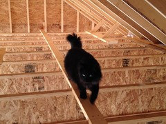 during construction Cat peeing floor on