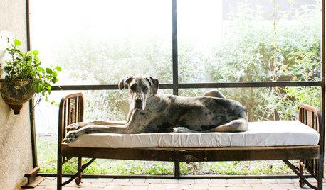 A Cuccia! 12 Soluzioni per Viziare il Tuo Cane