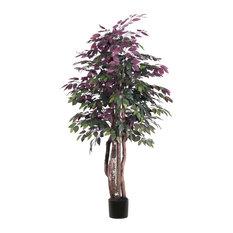 6' Capensia Executive Tree in Black Pot