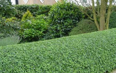 Grüne Alternative: 4 Ersatzpflanzen für den Buchsbaum