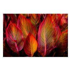 """Glowing Leaves, Canvas Giclee, 24""""x16"""""""