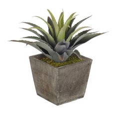 Artificial Star Succulent in Grey-Washed Wood Cube