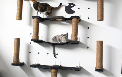 How to Design Your House Around Your Pet
