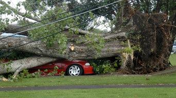 Tree Trimming Millcreek UT