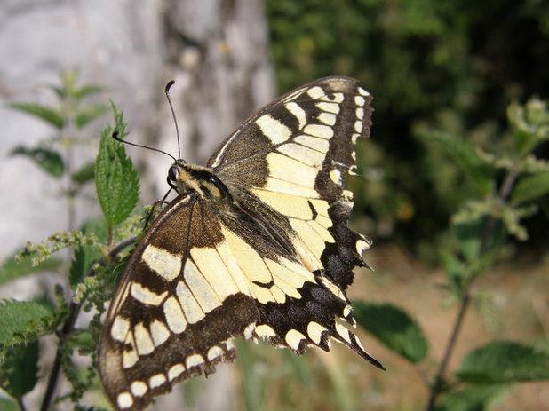 Comment attirer les papillons dans votre jardin et les - Comment attirer des oiseaux dans son jardin ...