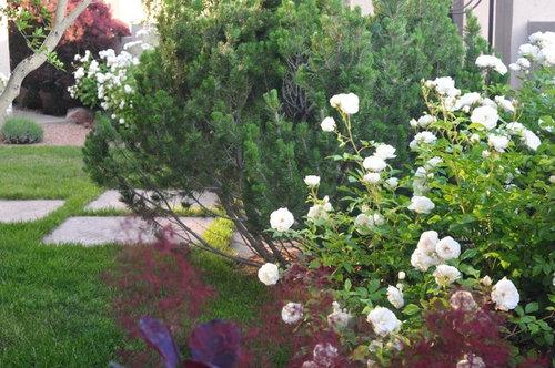 Virtual Tour Of My Garden