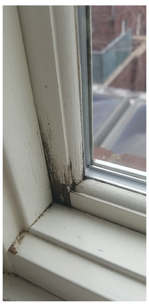 Marvin Windows My House Full Of Rotted Frames Need To Replace Them