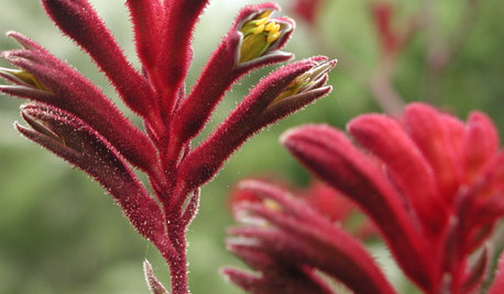 14 Red Flowers for Gardens From Coast to Coast