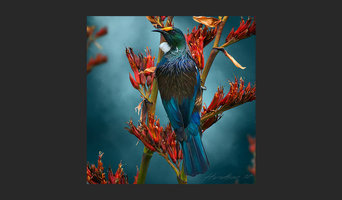 Birds of a Feather - Tui Teatime