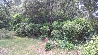 Création de grande pelouse et plantation d'arbres