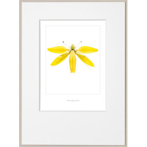 """""""Bright Yellow Dragonfly"""" Poster With Border, 30x40 cm"""