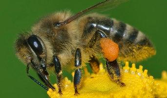 7 days Bee Control Brisbane