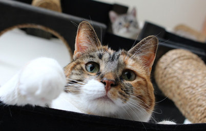 Feline Boundaries: A Vet States the Case for Keeping Cats Indoors