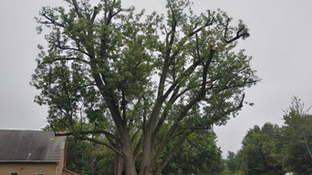 After storm tree repair