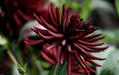 Jardin : Apportez de la profondeur à votre extérieur grâce au noir