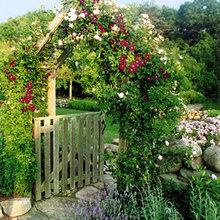 Gates, fences and arbors
