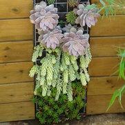 Foto de Naturalgreen jardiners