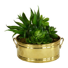 """Succulent Garden in Oval Brass Container, 7"""""""