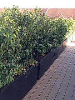 Balkonpflanzen Für Den Winter Schönsten Einrichtungsideen