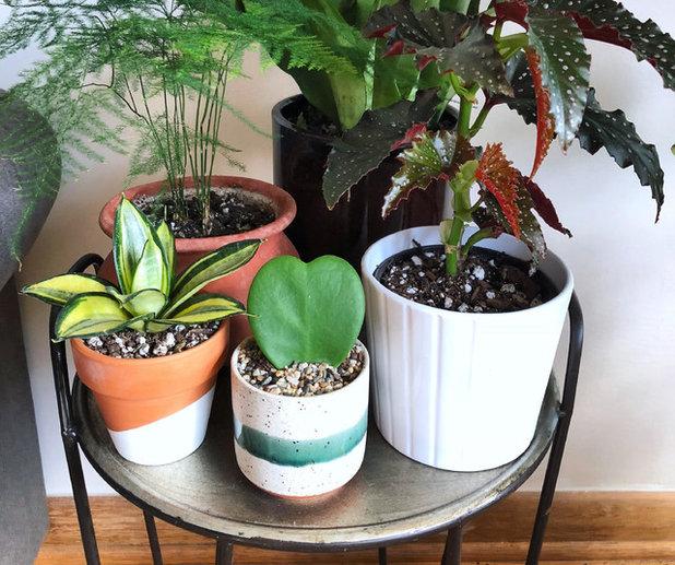 Share The Love With An Adorable Heart Hoya Plant