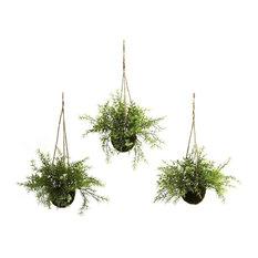 Ruscus, Sedum and Springeri Hanging Basket, Set of 3