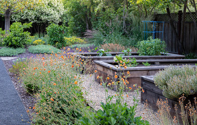 Essential Watering Tips for Your Edible Garden