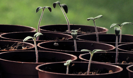 Planting Time: Get Your Garden Started With Seeds