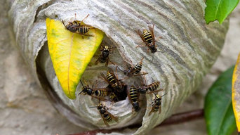 Green Cleaners Team Pest Control Hobart