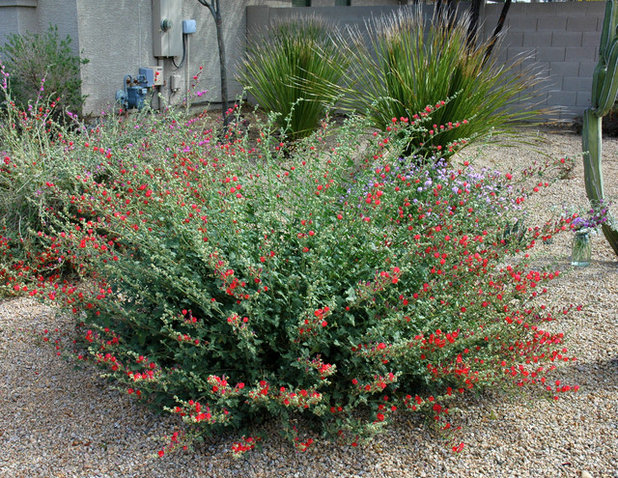 10 Cold And Heat Tolerant Perennials And Shrubs For The