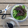 8 Essential Tools for the Kitchen Gardener