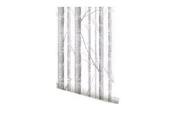 "Birch Tree Wallpaper, 24"""