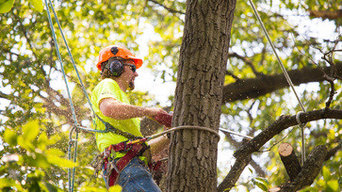 Columbus Tree Service Pros
