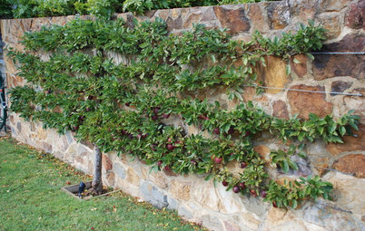 The Art of Espalier: How to Train Fruit Trees Into 2D Sculptures