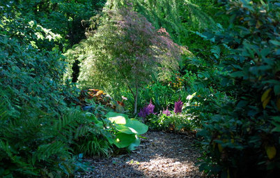 Set Your Shade Garden Aglow With Light