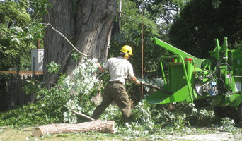 Tree Clean Up Safely with Chipper