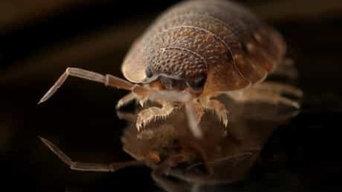 Parker Pest Control Services