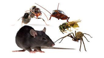 Marks Pest Control in Darlington