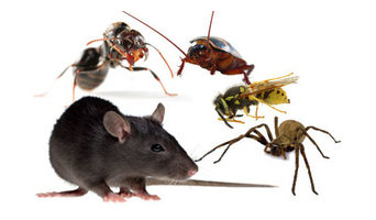Marks Pest Control in Darlington