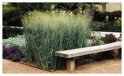 Traditional Plants by Patron Gardens