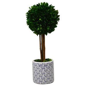 "Preserved Desktop Boxwood Topiary Planter, 14"" Ball Tree"